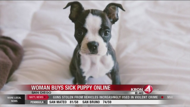 Puppy Bought On Craigslist Becomes Very Ill Suddenly
