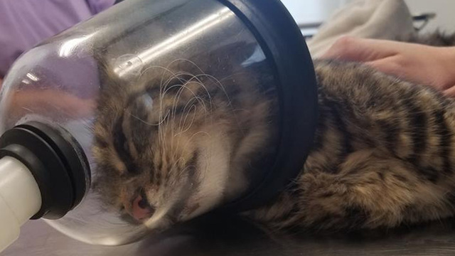 Community outraged after someone lights firecracker in cat's rectum