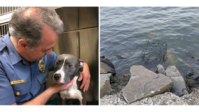 Pit bull left to drown in cage at water's edge in New Jersey