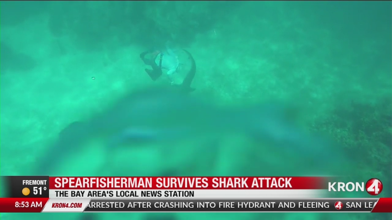 Spearfisherman survives shark attack, thankful to be alive