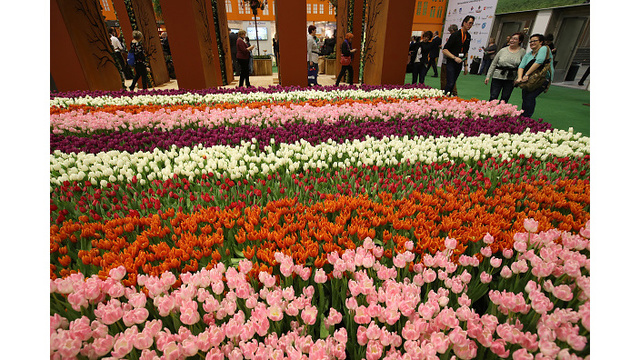 American Tulip Day: Thousands of free tulips up for grabs in SF this weekend