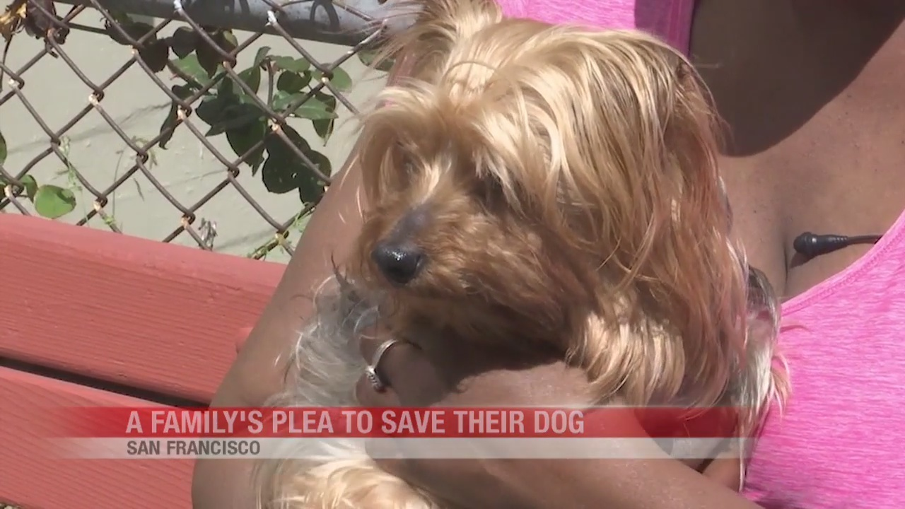 San Francisco family fighting to save beloved dog with tumor