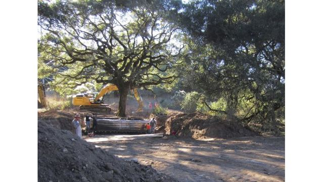Sonoma couple to pay nearly $600,000 for uprooting tree