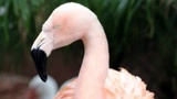 Flamingo euthanized at zoo after student on field trip throws rock at it