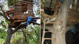 Police find burglary suspect hiding in treehouse complete with barbecue and fire pit